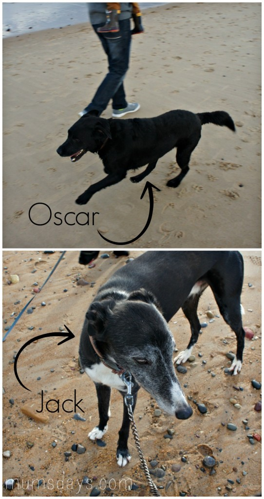 On the beach - we are lucky to live right by the beach so it's perfect for family fun with our dogs!